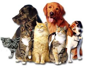 Pets-lędziny
