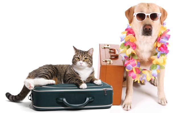 olwet-paszporty dla zwierzat